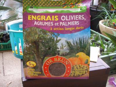 Blog de alsacepalmiers page 11 les palmiers - Engrais pour palmier ...