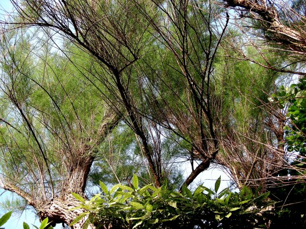 a1738 des nouvelles du jardin le tamaris blog de photos et de coups de coeur. Black Bedroom Furniture Sets. Home Design Ideas
