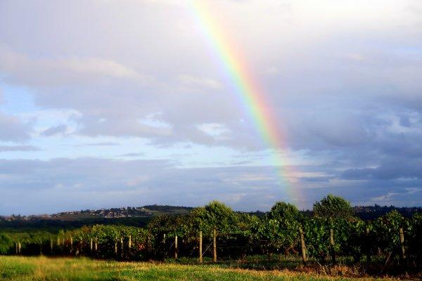 A2068 : Arcs-en-ciel en Beaujolais...