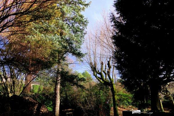A2091 : Rare soleil d'hiver...