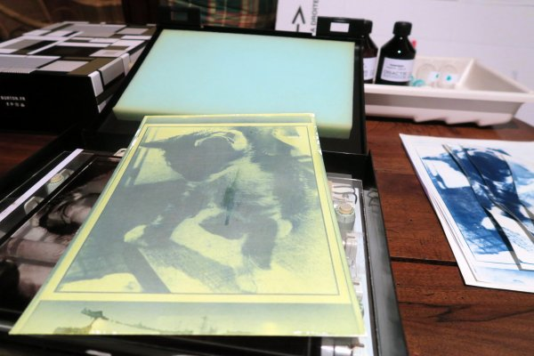 A2100 : Mes premiers cyanotypes !