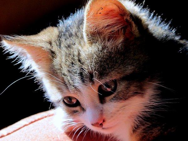 A2166 : Mon chat, déjà un bel album de photos ! (1)