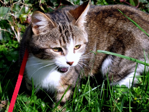 A2167 : Mon chat, déjà un bel album de photos ! (2)
