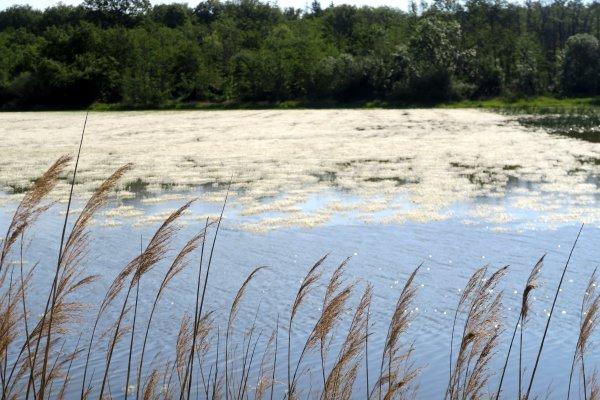 A2168 : Autour des étangs des Dombes (Ain)