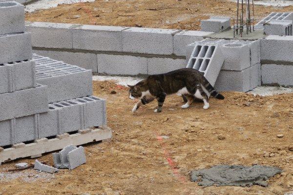 A2170 : Inspecteur des travaux, un vrai métier !