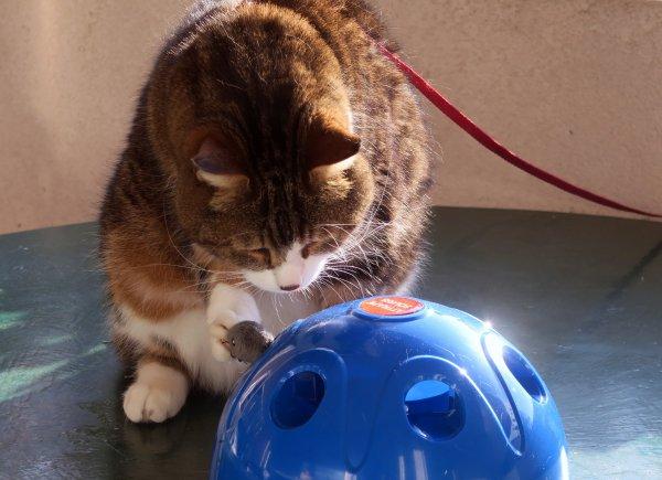 A2264 : Un amour de chat, Shaddy !