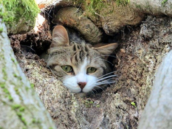 A2267 : Notre chat retrouvé après 11 jours de cavale !!!