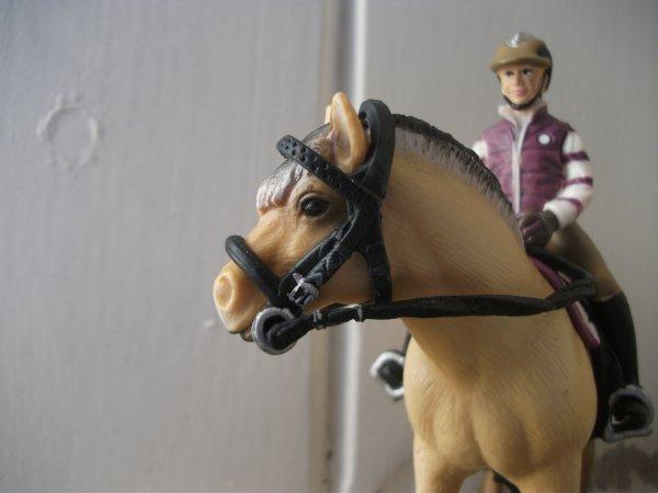 Quiwi le poney Fjord
