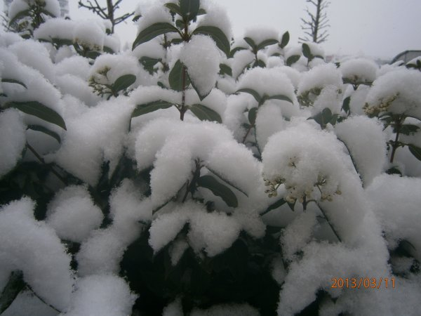 la neige