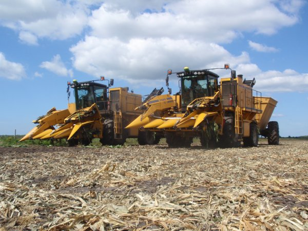 chantier mais doux avec JD 6630 ,6930 ,7530 et les deux machines oxbo