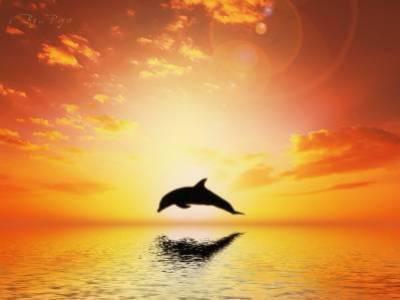 Un dauphin qui saute au coucher du soleil blog de kathy76320 - Coucher de soleil dessin ...