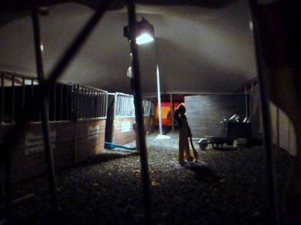 Zoo de nuit!