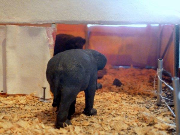 Parc éléphants cirque pinder