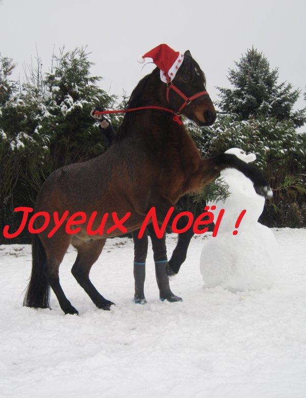 image cheval joyeux noel