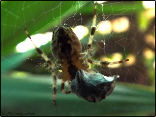 La mouche prise au piège de l'araignée a la consolation de mourir dans la soie.