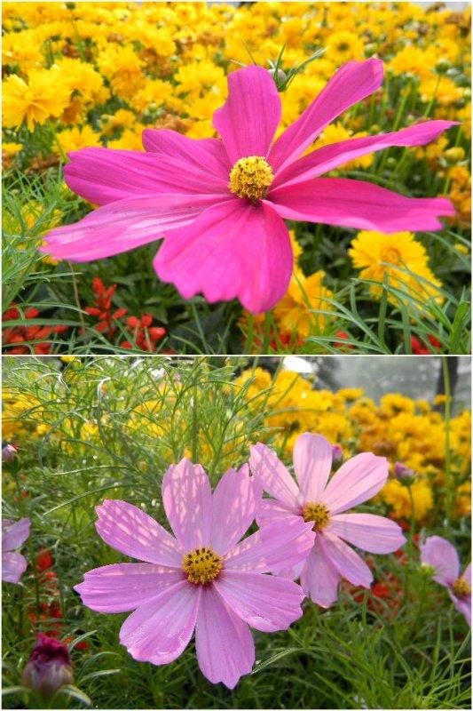 J'aime tellement  les fleurs