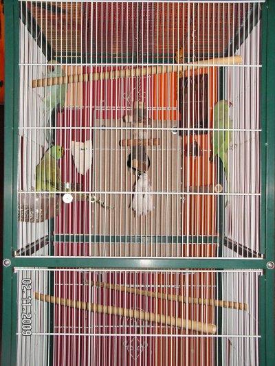 Le nid est installé