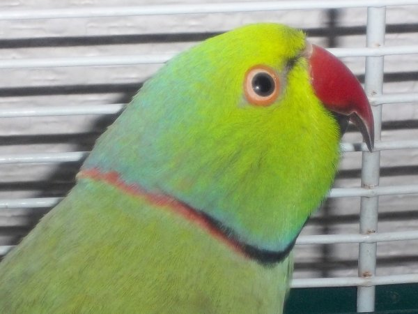Kiwi et Turquoise