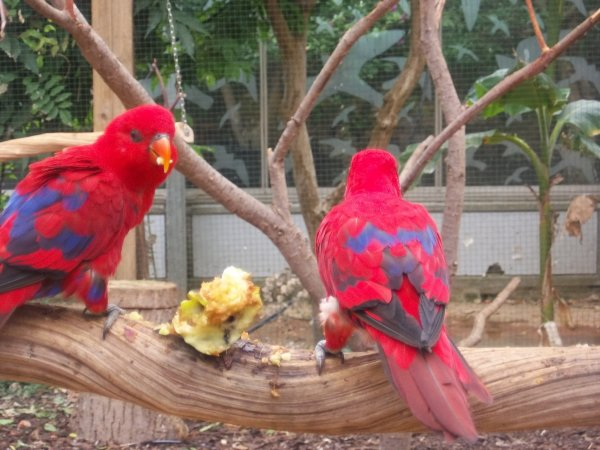 Visite du Parc PARADISIO