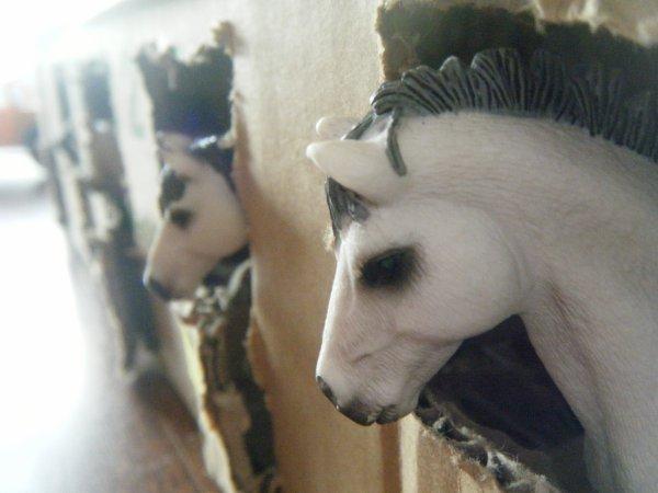 Ecurie des poneys :)
