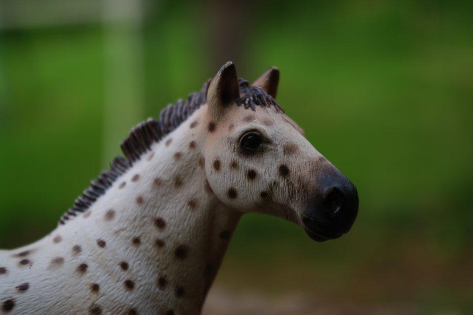 ♣ Domaine Horse Racing ♣