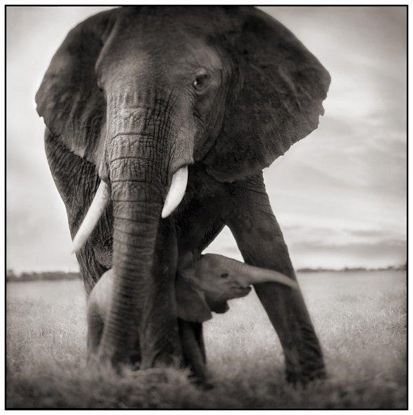 Célèbre Éléphants - Blog de fOu-de-nOir-et-blanc GQ97