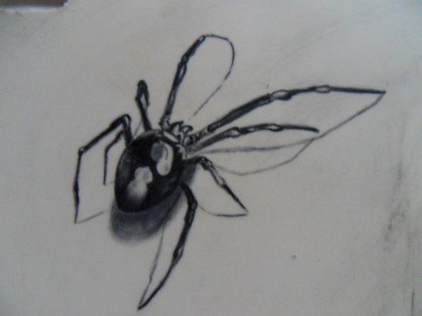tatoo araignée