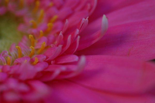 Les bouquets macro