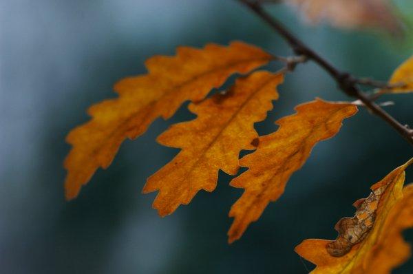 les feuilles macro