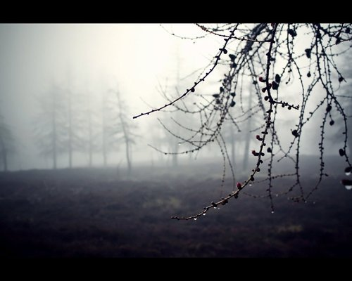 """. """" Je n'es jamais accordé d'importance à la façon dont j'allais mourir. Mais mourir à la place de quelqu'un que j'aime, semble être une bonne façon de partir. """" Twilight.."""