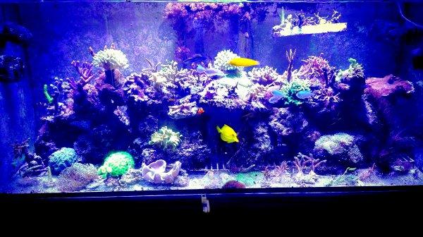Mon aquarium eau de mer