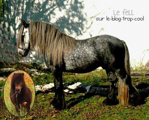 Le fell