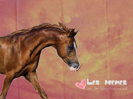 poème pour les chevaux