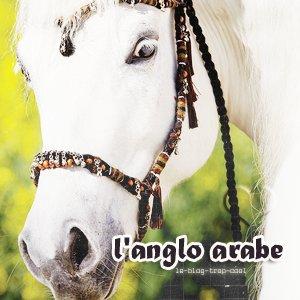 Ango-arabe