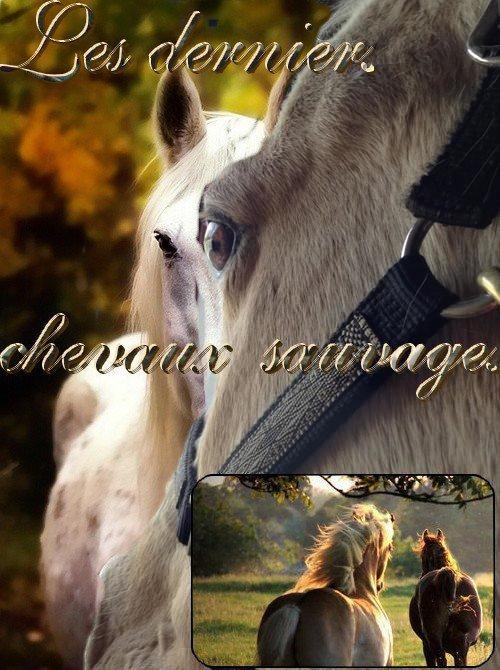 Les derniers chevaux sauvages