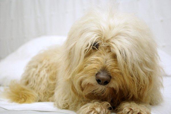 Regarde ton chien dans les yeux, et tu ne pourra pas affirmer qu'il n'a pas d'âme.