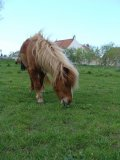 Photo de Vend--Matos--pour--poney