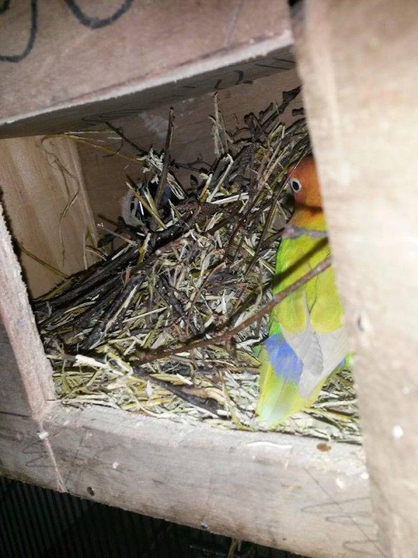 voici le commencement du nid