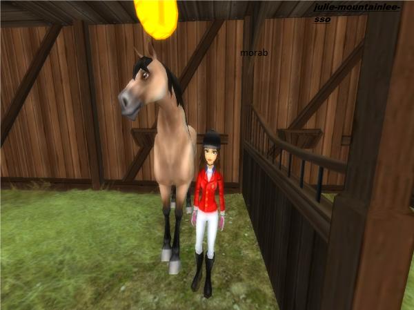 choix du nouveaux cheval sso