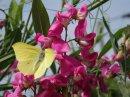 Photo de ange-papillon034