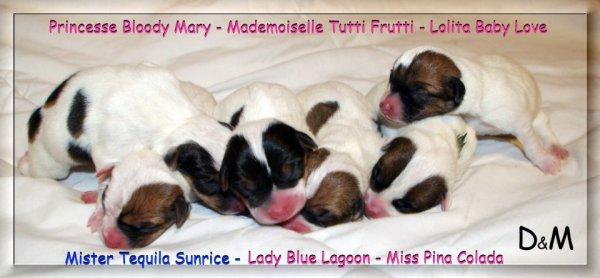 maya et dog sont heureux de vous annoncer la naissance de leurs bébés