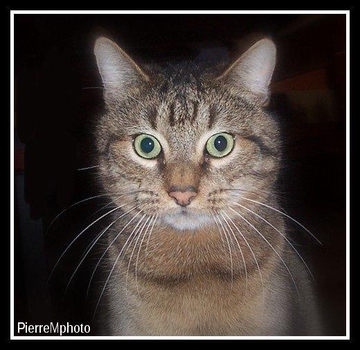 Maurice , le chat hypnotiseur