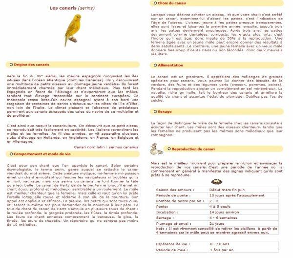 Fiche Conseil Sur Les Canaries