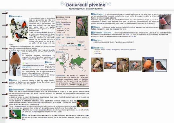 Fiche Conseil Du Bouvreuil Pivoine!!!