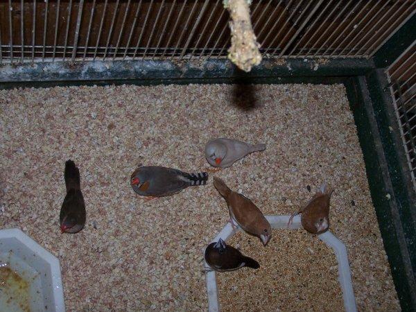 Tout Mes Oiseaux Becs Droits