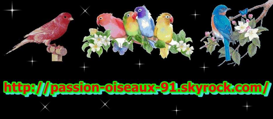 Passion-D'Oiseaux