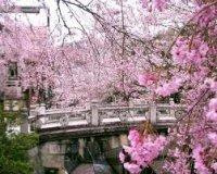 les bonnes manières au japon!!!:)
