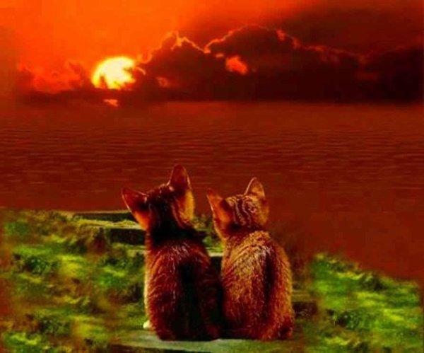 (l) 2 chats coucher de soleil (l)