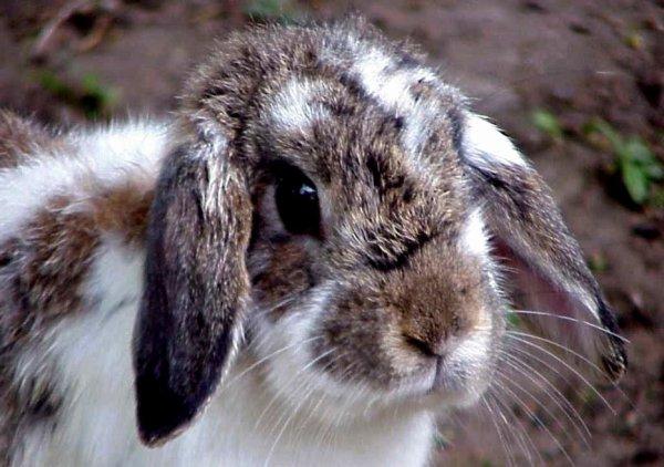 1) Pour en savoir plus sur le lapin !