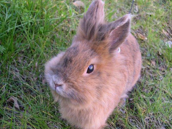 3) Les sens du lapin
